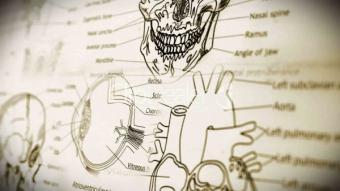 8 ciudatenii despre corpul uman