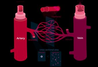 Ce nu stiai despre vasele de sange
