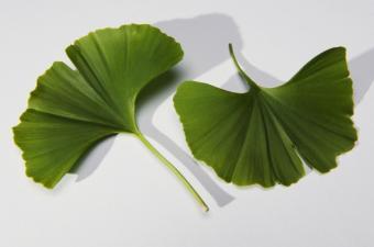 Ginkgo biloba, un tratament natural pentru dementa?