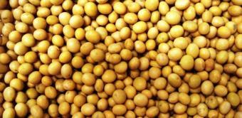 Proteina din soia