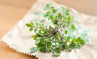 Puterea plantelor: cele mai bune plante in functie de fiecare problema a tenului