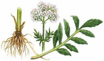 Remedii din plante pentru anxietate si depresie