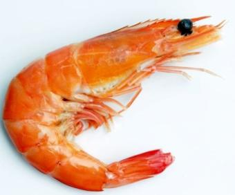 Uleiul de krill, Omega-3 concentrat