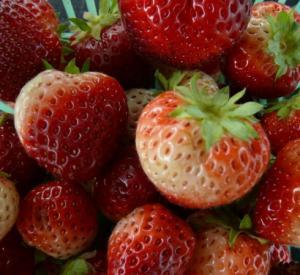 Cand sunt fructele numai bune de mancat si bogate in nutrienti?