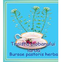 Ceai de traista ciobanului