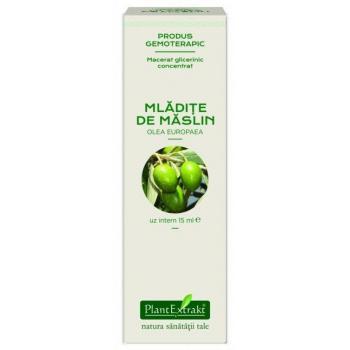 Extract concentrat din mladite de maslin - olea europaea mg 15 ml PLANTEXTRAKT