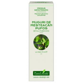 Extract concentrat din muguri de mesteacan pufos - betula pubescens mg 15 ml PLANTEXTRAKT
