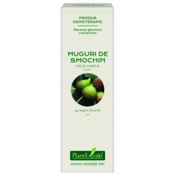 Extract concentrat din muguri de smochin - ficus carica mg 15 ml PLANTEXTRAKT