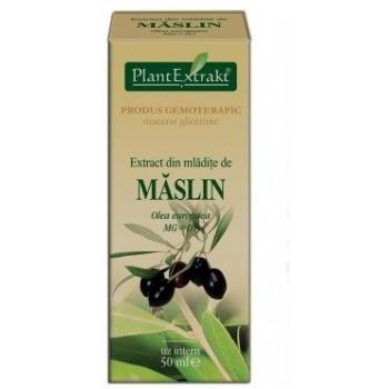 Extract din mladite de maslin - olea europaea mg=d1 50 ml PLANTEXTRAKT