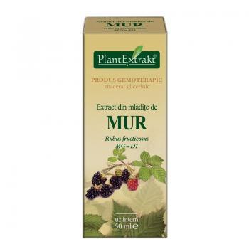 Extract din mladite de mur - rubus fructicosus mg=d1 50 ml PLANTEXTRAKT