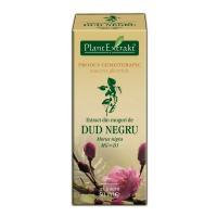 Extract din muguri de dud negru - morus nigra mg=d1