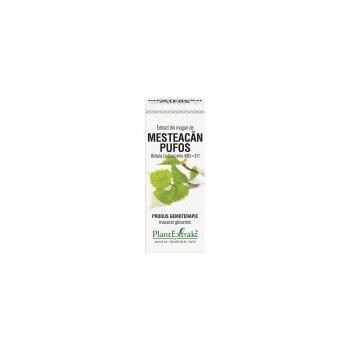 Extract din muguri de mesteacan pufos - betula pubescens mg=d1 50 ml PLANTEXTRAKT