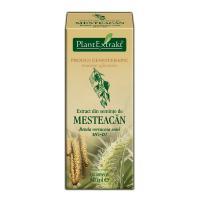 Extract din seminte de mesteacan - betula verrucosa semi mg=d1