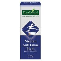 Nicotan antitabac plant