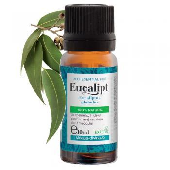 Ulei esential de eucalipt 10 ml STEAUA DIVINA