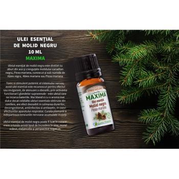 Ulei esential molid negru  10 ml MAXIMA